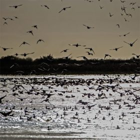 sunrise-ducks1