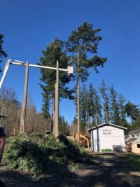 TREE REMOVAL-2