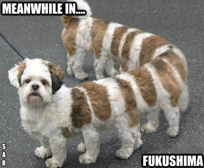 Fukushima Dog Radioactive
