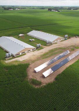 Pork Farm Utilizing Solar Panels