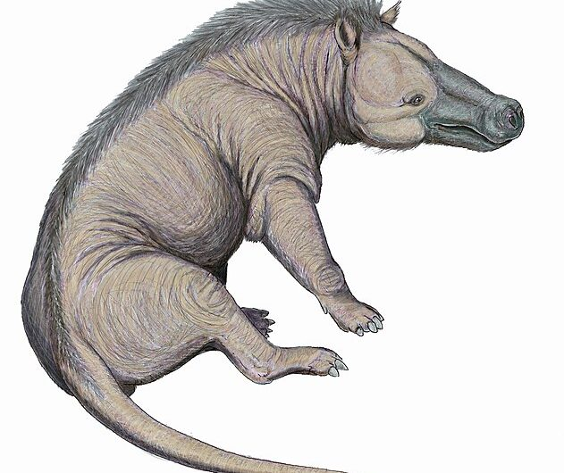 People Also Ask: Is Andrewsarchus a Dog? (Cryptozoo)