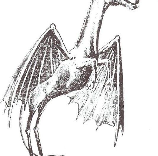 Menagerie Monstrum: The Finest Horse / Bat / Kangaroo Monster America Has to Offer