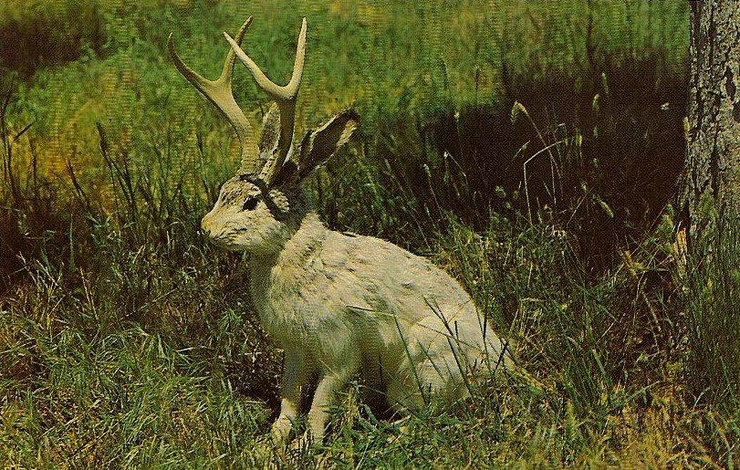 Menagerie Monstrum: A Roundup of Rare, Rascally Rabbits