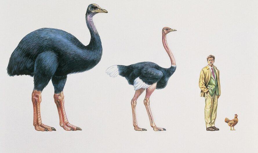 Menagerie Monstrum: Handbook for the Recently Extinct (Part 1)