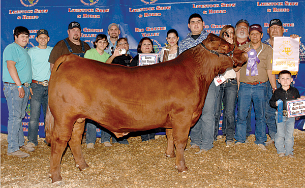 Reserve Grand Champ Steer $15,000 prize winning steer at the RGV Livestock Show