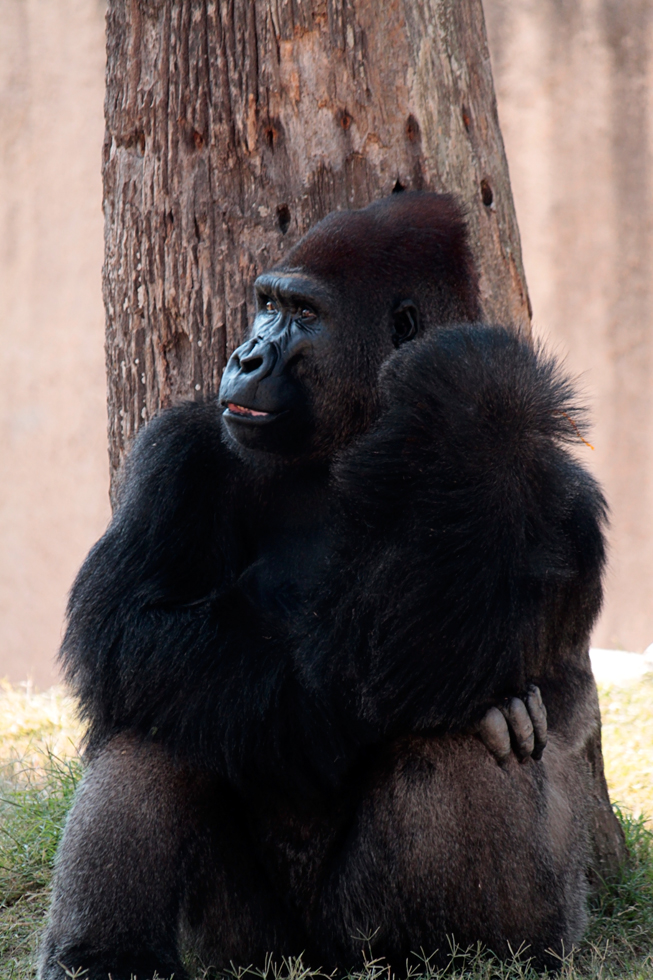 Moja's sudden death shocked zoo officials