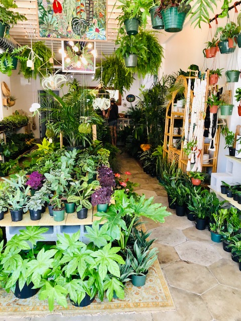 Lida's Jungle on Central Avenue in St Petersburg