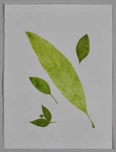 A Leaf in the Wind #8, Devil's Tree, Cinnamon, Sapodilla Plum & Tree of Sadness