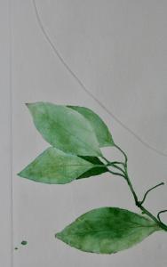 A Leaf in the Wind #6, Beleric Myrobalan, Sapodilla Plum & Cinnamon (detail)
