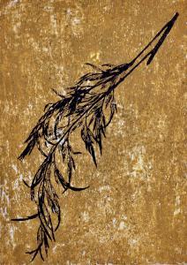A Leaf in the Wind #15, Silky Oak Tree