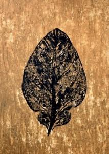 A Leaf in the Wind #13, Krishna's Buttercup