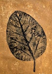 A Leaf in the Wind #16, Banyan