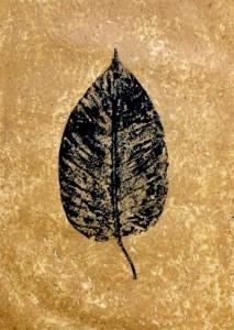 A Leaf in the Wind #14, Kadamba