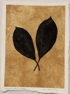 Sanskriti Leaves, Cestrum Nocturnum
