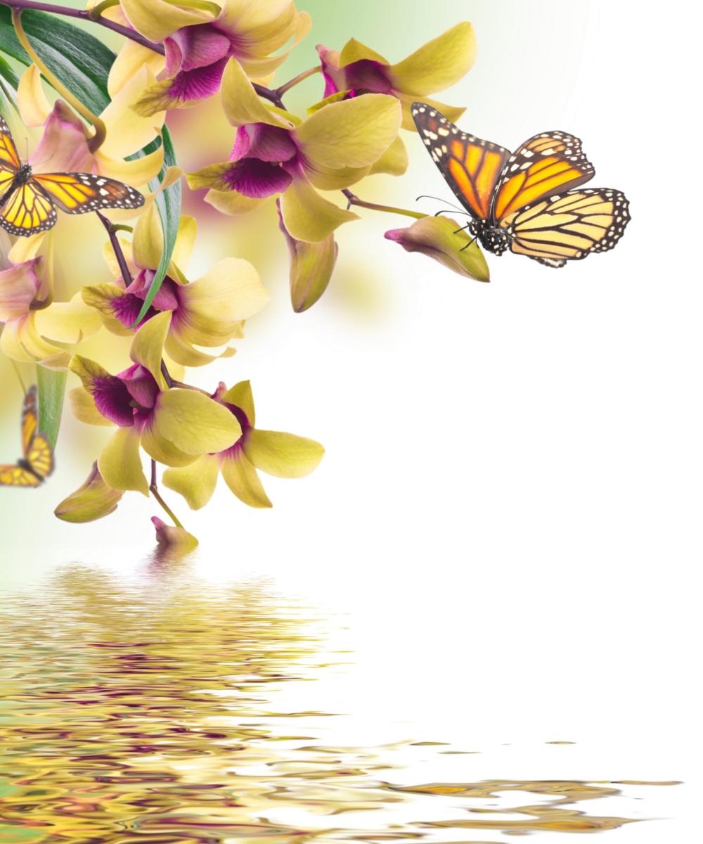 aliese butterfly flowers