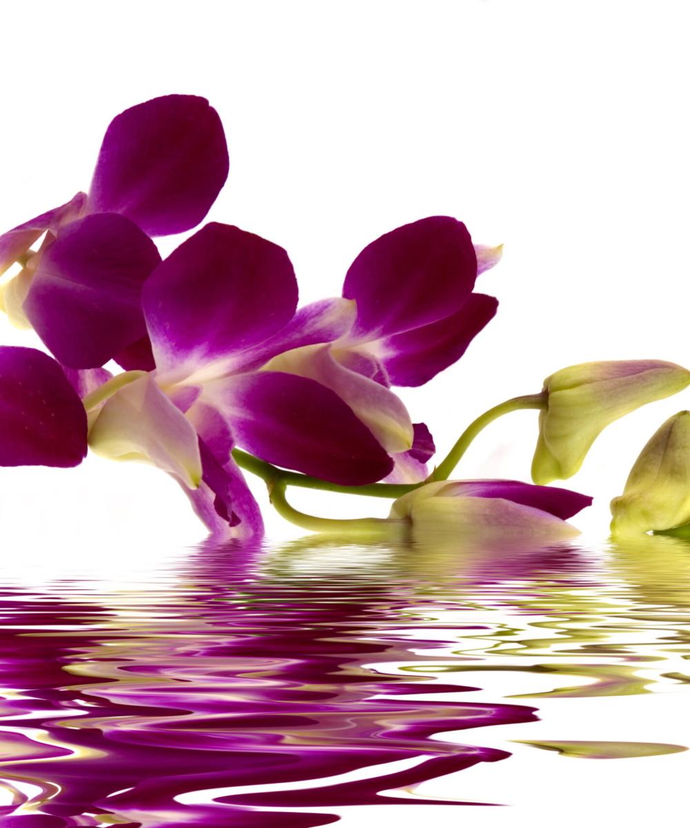 aliese flowers