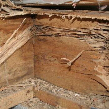 Does Homeowners Insurance Cover Termite Damage   Parker Pest Control