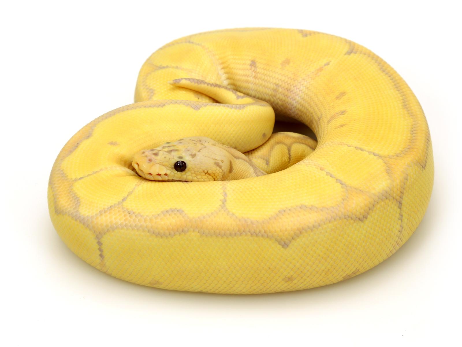 Banana Blade Pastel Clown