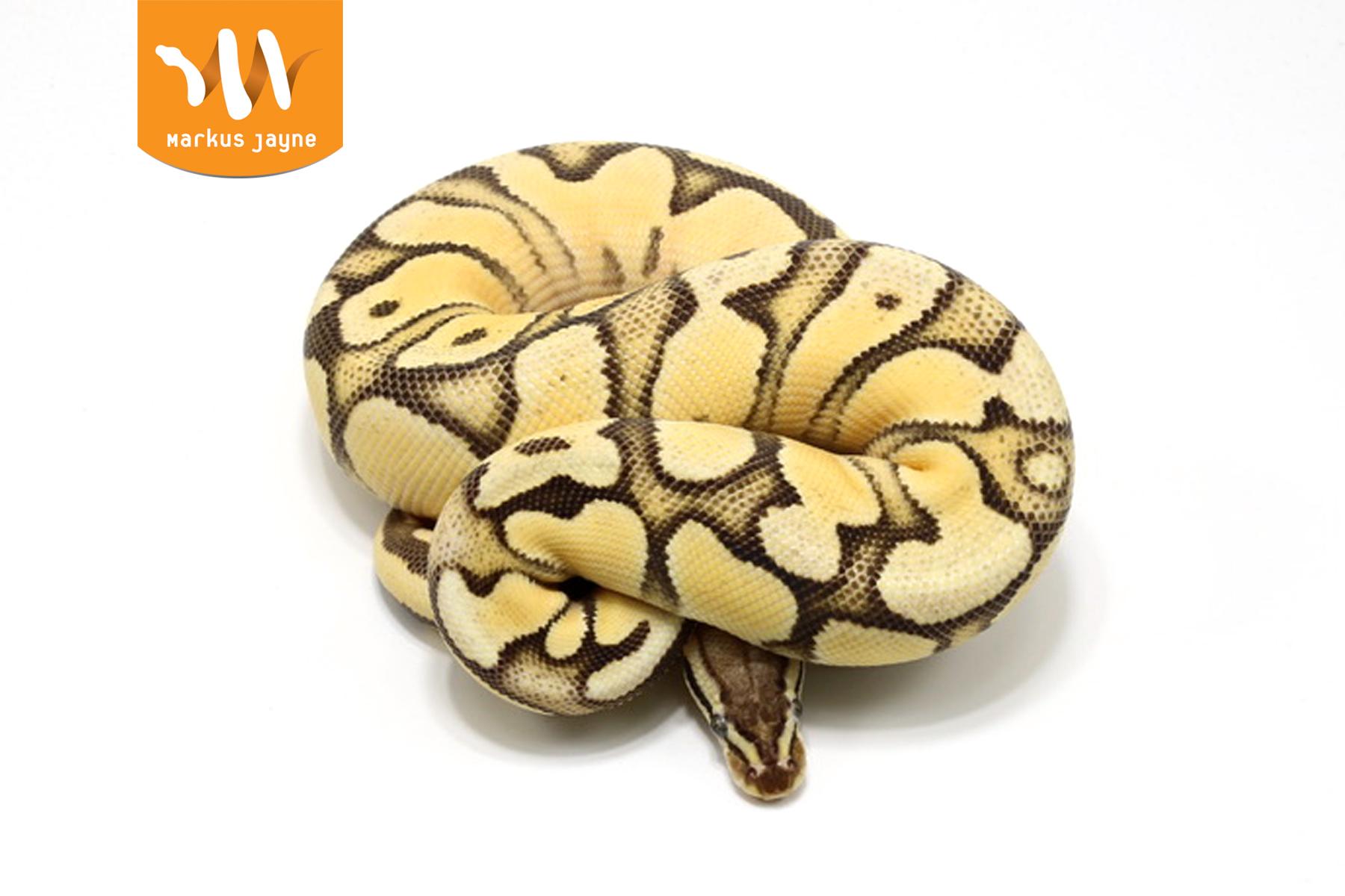 Super Orange Dream Vanilla Pastel – F – '20