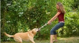 Dog Tug of War - setting the basic rules - dogspeaking.com