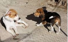 dogs playing 2 puppies playing - dogspeaking.com
