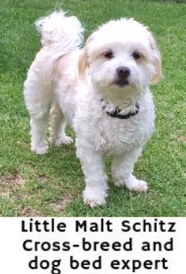 Little Malt - Bed expert dogspeaking.com