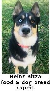 Best dog collars by Heinz Bitza - Dogspeaking.com