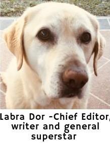 Labra Dor superstar and chief editor of dogspeaking.com