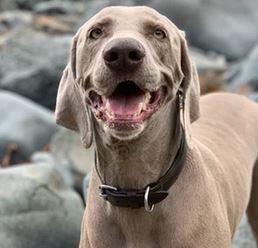 Neoprene dog collars for the outdoor type -dogspeaking.com