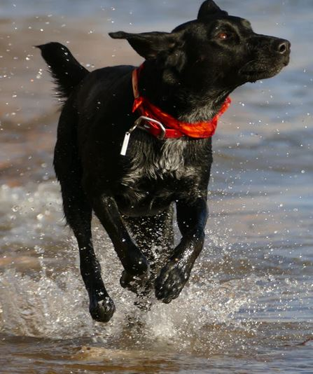 Biothane is perfect for water dogs - dogspeaking.com