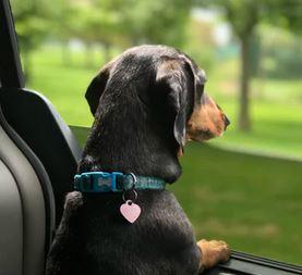 Lupine nylon dog collar - dogspeaking.com