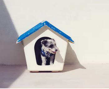dog houses- outdoor dog houses - dogspeaking.com