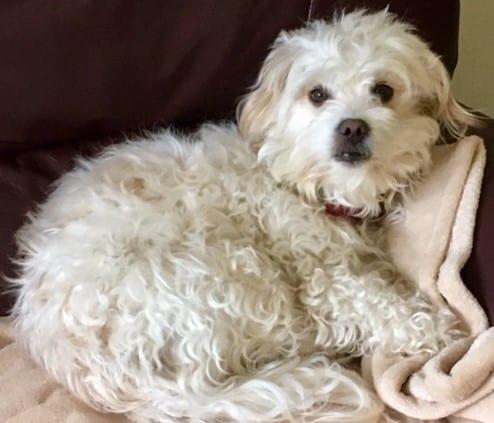 Dog Training - introductionLittle Malt sleeping - Dogspeaking