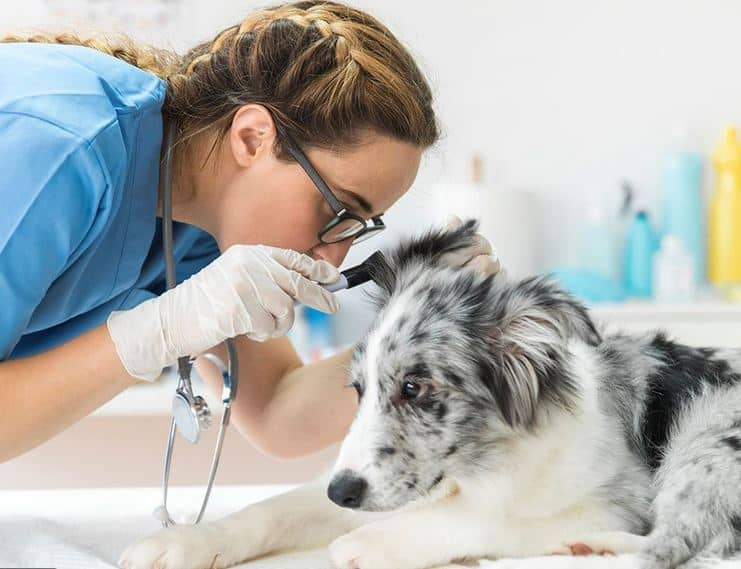 Caring for Canines - Quick tips for looking after a new puppy Dog at vet. Dogspeaking.com
