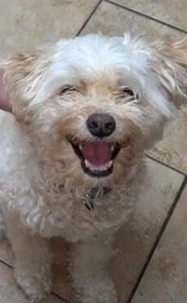 a Happy dog is one tha's given love - dogspeaking.com