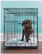 Little dog in a crate for dog training - dogspeaking.com