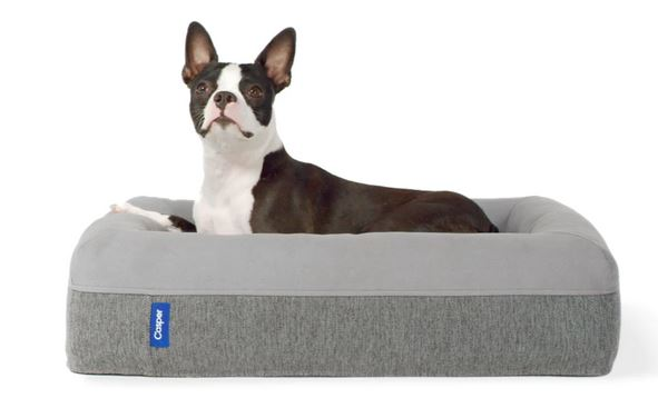 Casper dog bed - the best dog bed