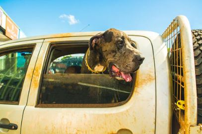 dog with head out of window - dogspeaking.com