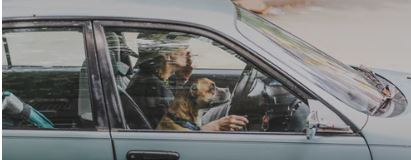 dogs in cars - keep your dog in the back - dogspeaking.com