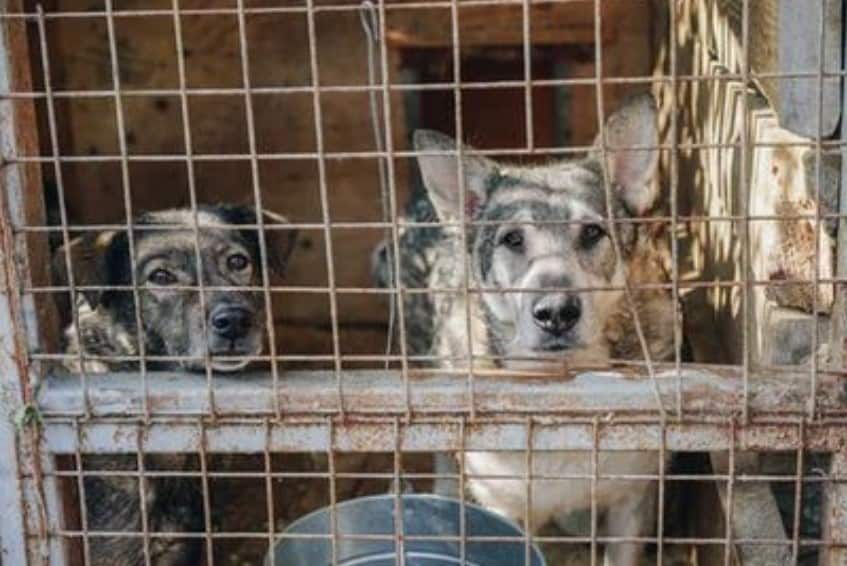 Two dogs in a cage - dogspeaking.com