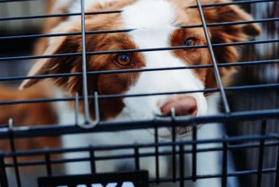 dog crates and dog crate training - little dog in crate dogspeaking.com