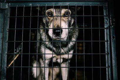 dog crates and dog crate training - dogspeaking.com