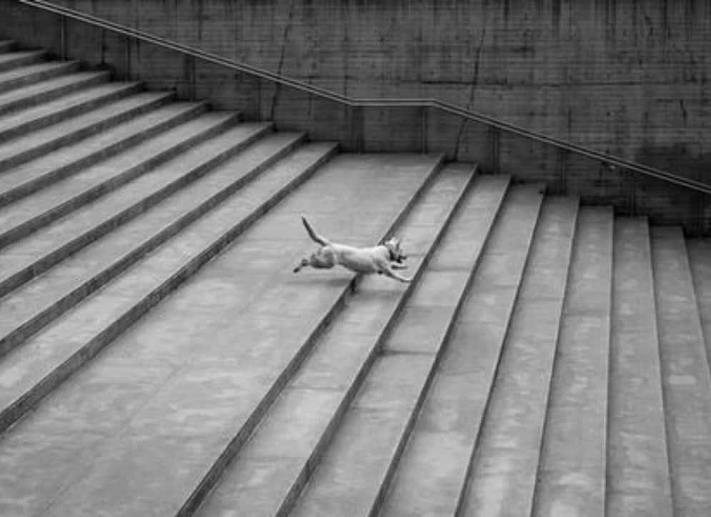 dog steps and dog ramps dogspeaking.com
