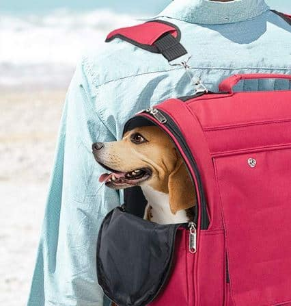 dog crates - Travel dog crates and dog carriers