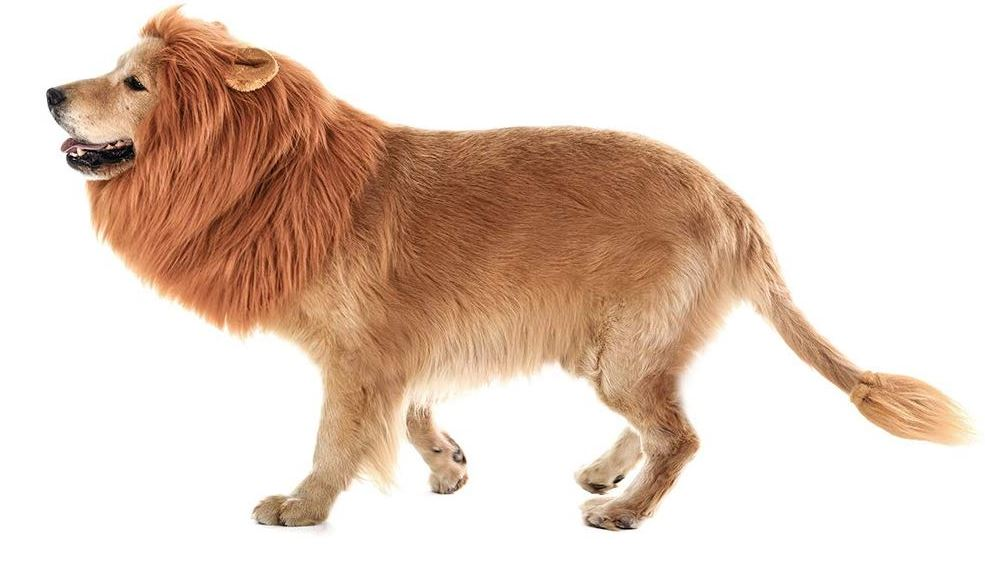 Lions wig for medium to large dogs