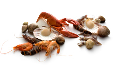 City Palate Guide To The Good Life in Calgary Seafood Recipes