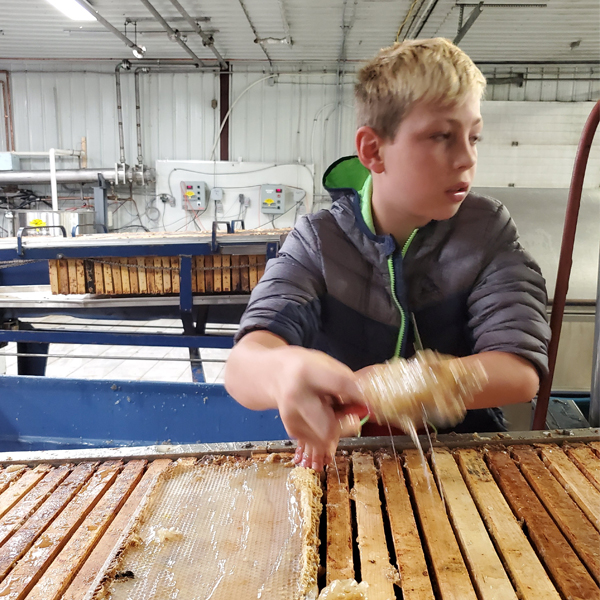 stettler boy extracts honey from a comb