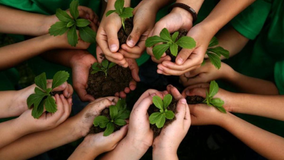 A reforestar – Por: Darío Echeverry Jr