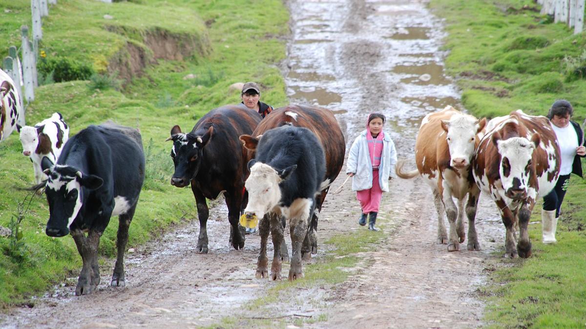Es posible abandonar la ganadería – Por: Jaime Calderón Herrera
