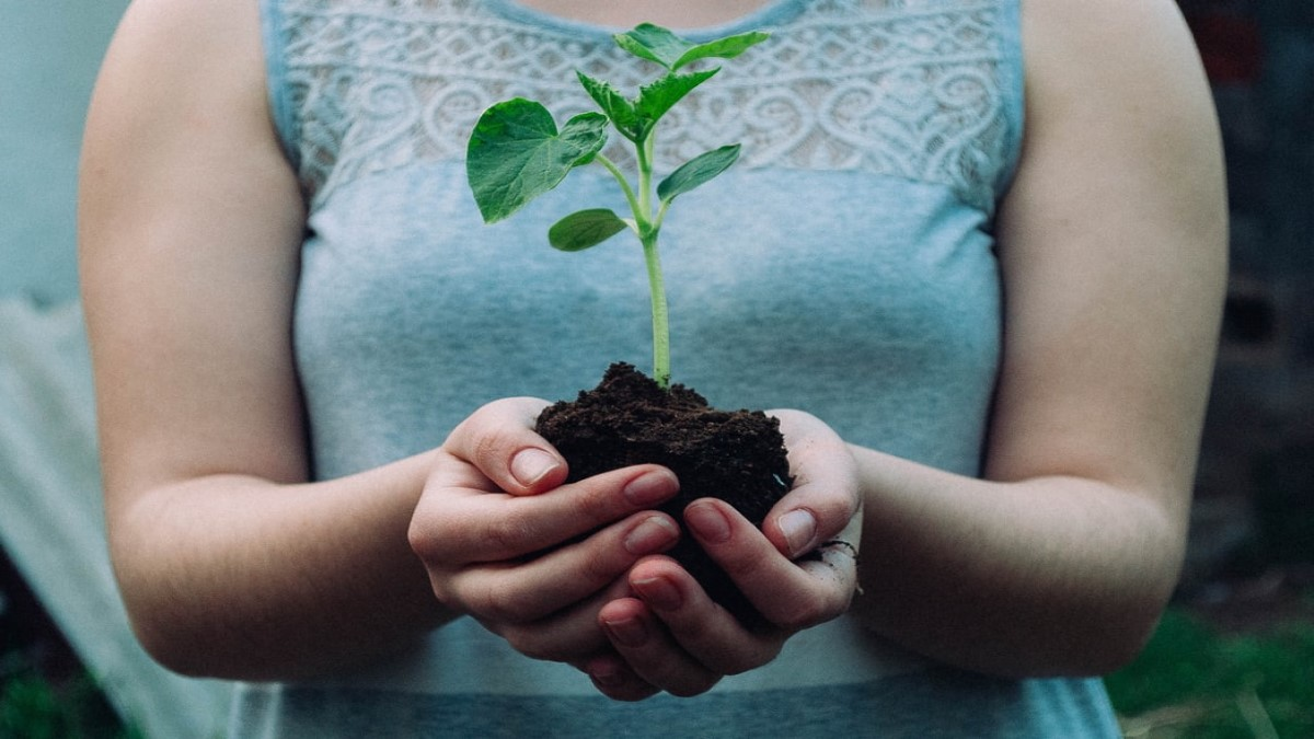 A reforestar urgente – Por: Darío Echeverry Jr